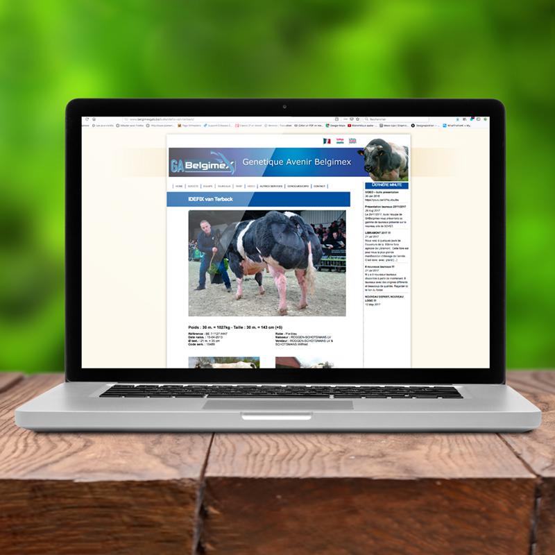 Site internet permettant d'afficher les fiches des taureaux.